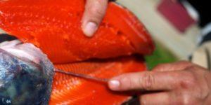 salmon filleting with trevor bird