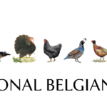 National Belgian Day Chambar